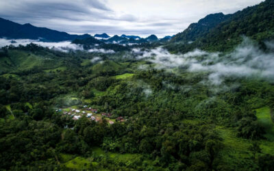 6 guiding principles for successful restoration of tropical forest landscapes